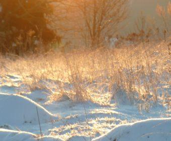 winter_klein